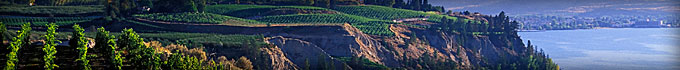 Pentiction-Vineyards-banner-image.jpg